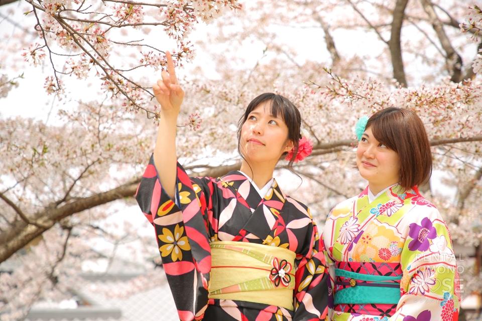 写真:可憐な着物姿で桜舞う京都女子旅のロケ撮影