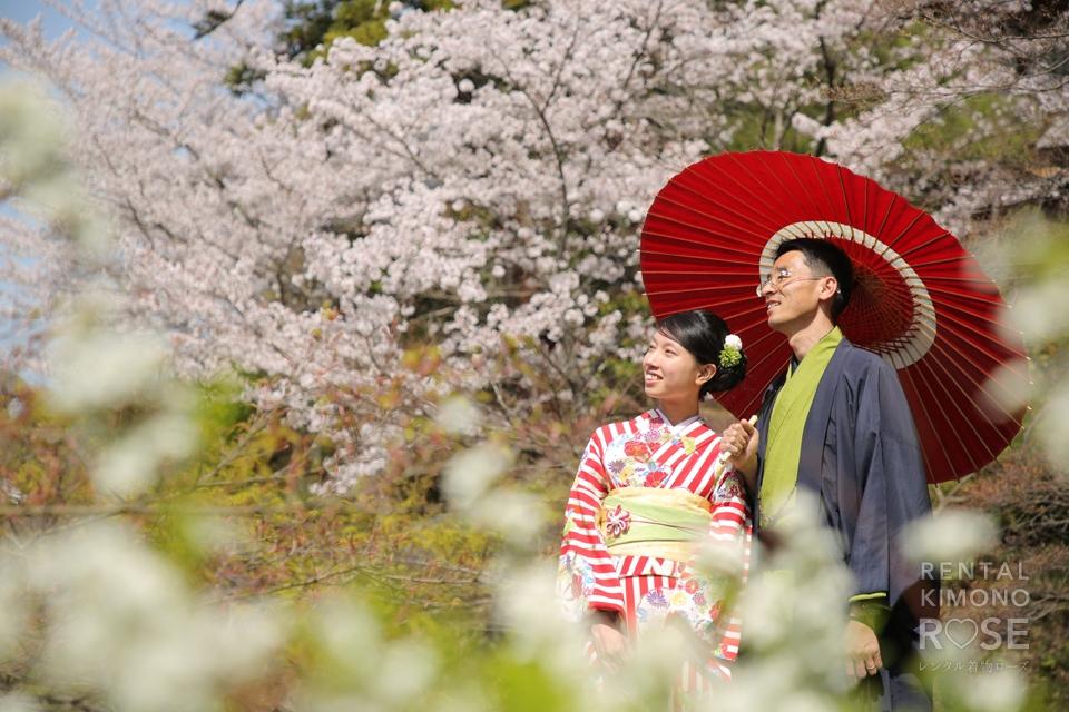 写真:着物姿が美しいご夫婦で桜の花咲く京都東山ロケ撮影